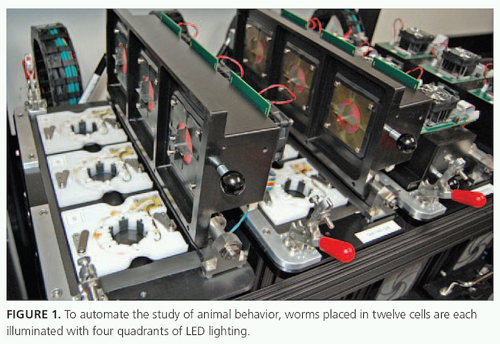 Worms placed in cells are each illuminated with four quadrants of LED lighting