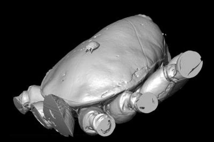 Researchers at the University of Manchester and Humboldt University, Berlin have used x-ray CT scanning to produce 3-D images of a prehistoric mite