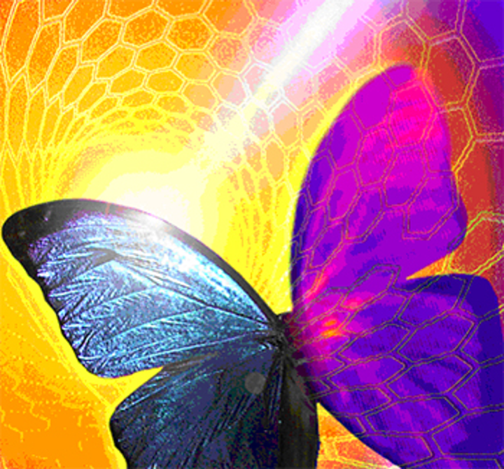 Doping the butterfly scales of Morpho butterflies with nanotubes can create new thermal imaging sensors