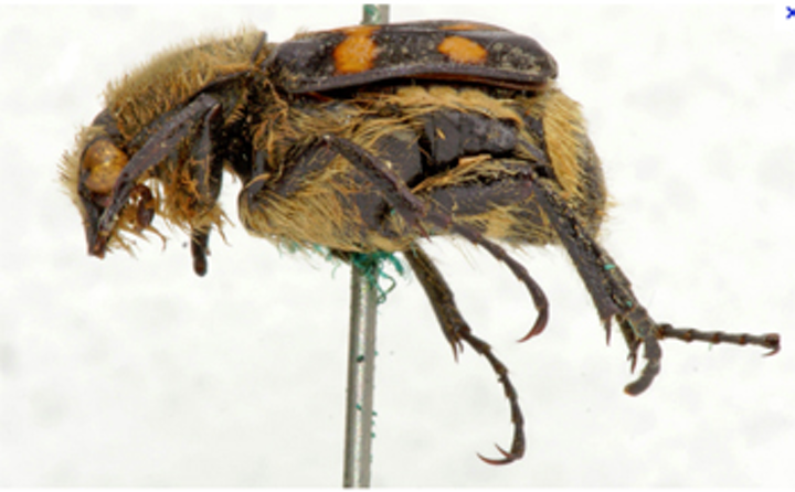 A proposed robotic system will automate the capture of 3-D images of insects.