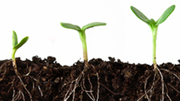 Image analysis software can automatically distinguish plant roots from other materials found in soil.