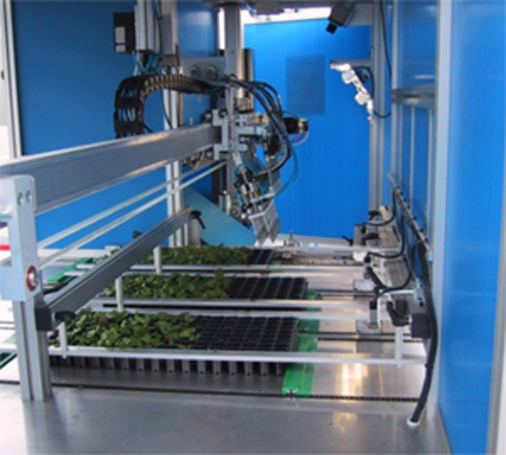 Vision system sorts out the plants