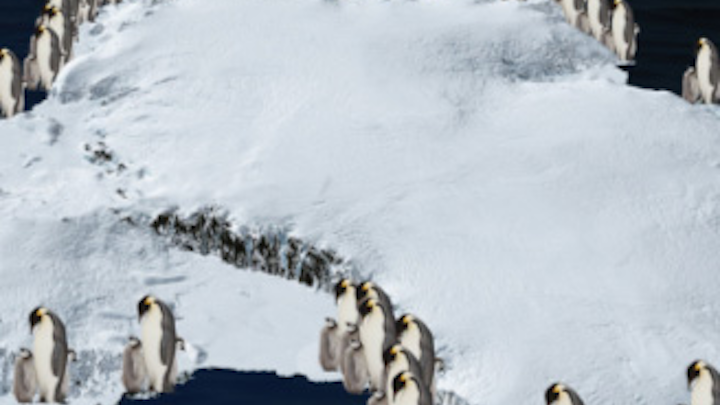 An international team of scientists has used satellite images to estimate the number of penguins at each colony around the coastline of Antarctica.