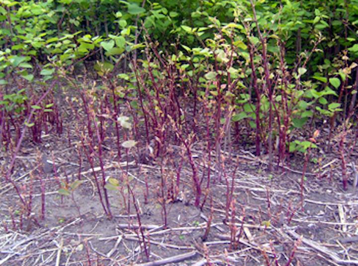 Smartphone app tracks invasive plants