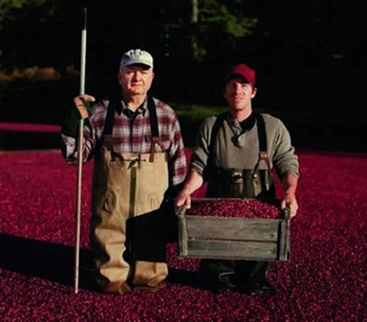 Cranberries sorted by vision system
