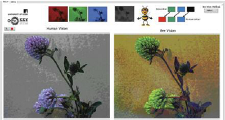 Dual camera system enables humans to see like bees