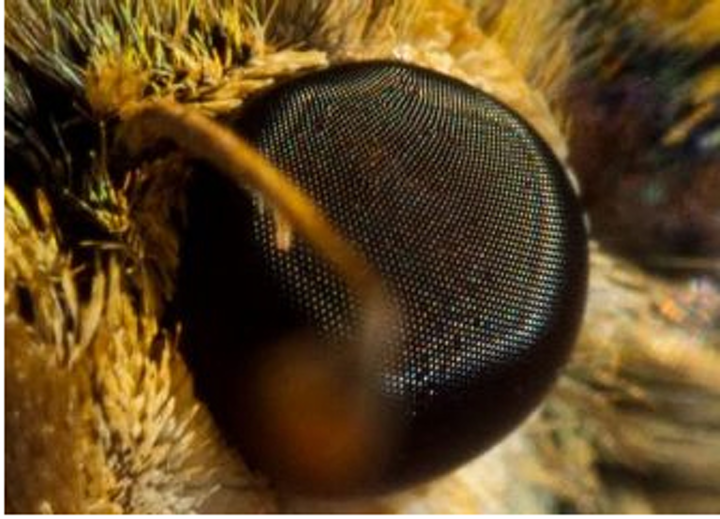 Coating copies the eye of a moth