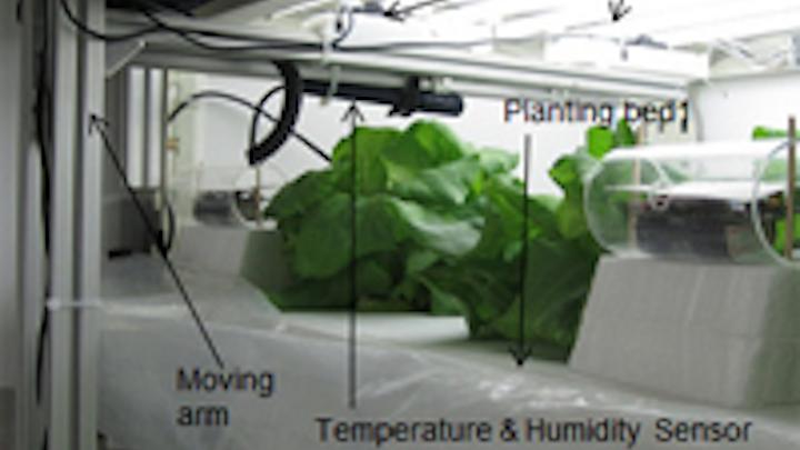 3-D vision system measures lettuce growth