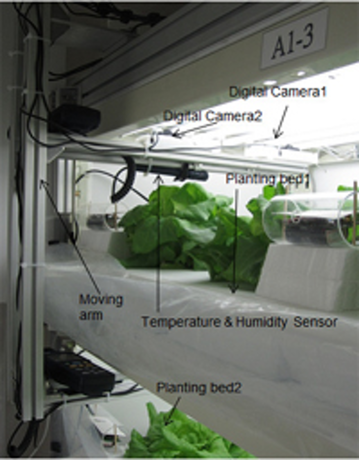 3-D vision system measures lettuce growth