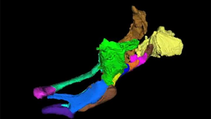 MIT system captures 3-D images of zebrafish larvae