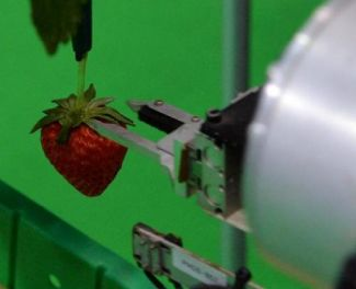 Content Dam Vsd Online Articles 2013 09 Strawberry Picking Robot