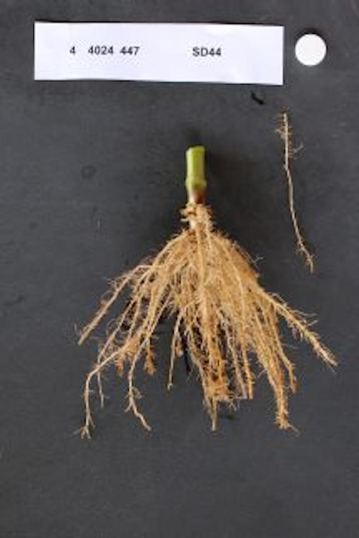 Content Dam Vsd Online Articles 2014 10 Plant Roots1 Copy