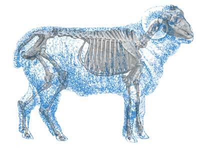 Fea1 Sheepopener 1107vsd