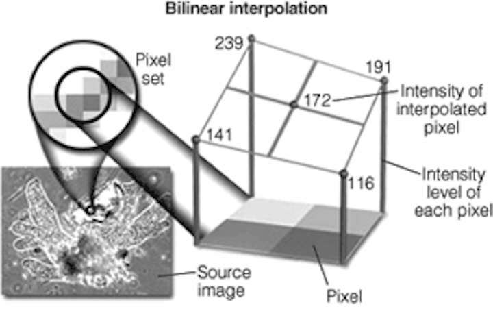 Understanding image-interpolation techniques | Vision Systems Design