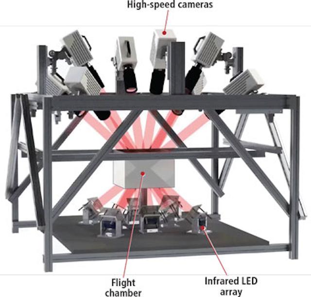 High-speed imaging sheds light on secrets of flight | Vision