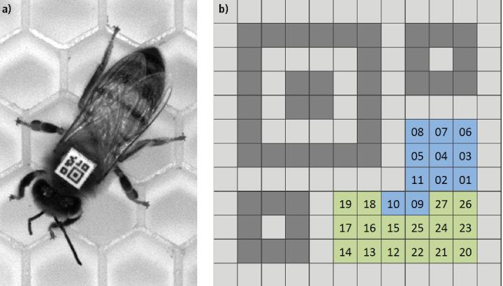 LED Illumination shines new light on bee behavior | Vision Systems