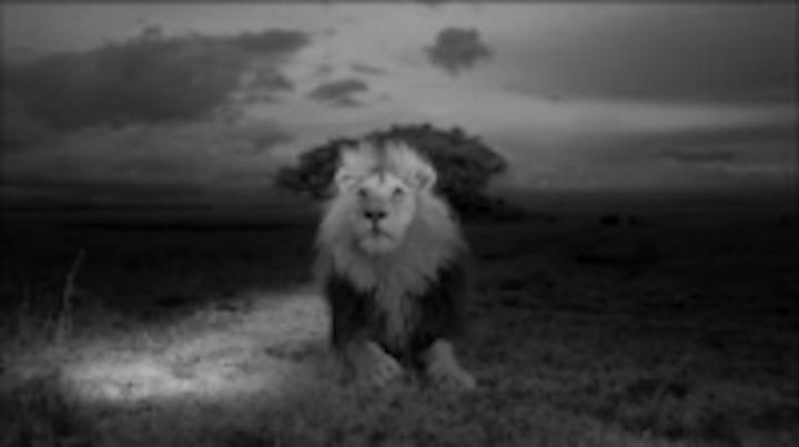 Content Dam Vsd En Articles 2013 11 Five Up Wildlife Imaging Applications Leftcolumn Article Thumbnailimage File