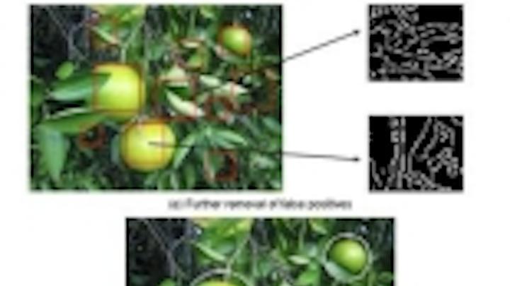 Content Dam Vsd En Articles 2014 01 Page 2 Algorithms Provide More Accurate Citrus Crop Yield Estimate Leftcolumn Article Thumbnailimage File
