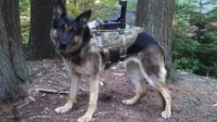Content Dam Vsd En Articles 2015 09 Canine Vision System Provides Eyes For Dog Handler In Military Applications Leftcolumn Article Thumbnailimage File